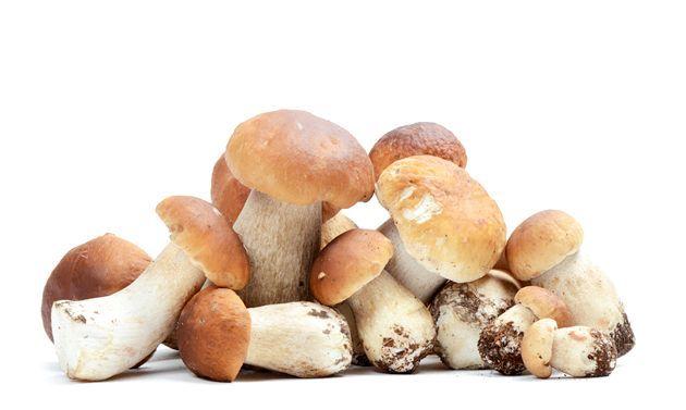 Білі гриби - рецепти страв
