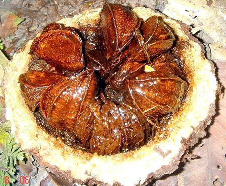 Чим корисний бразильський горіх?