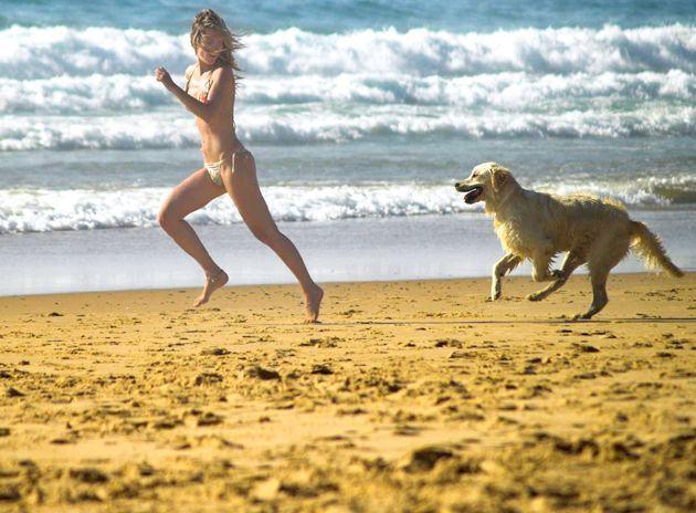 Що таке аnimal-fitness?