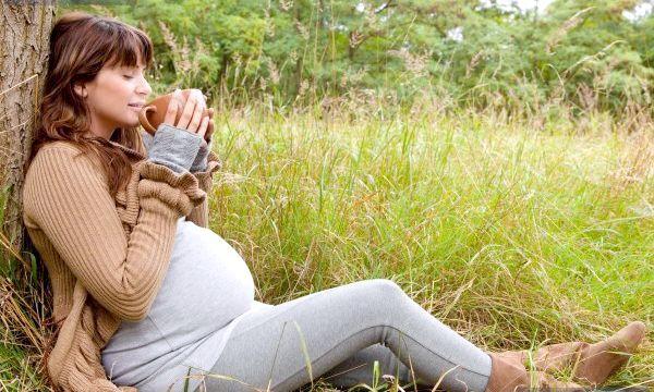 Цикорій при вагітності: чи можна пити і чим він корисний?