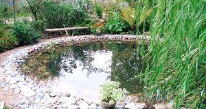 Декорування водойми рослинами
