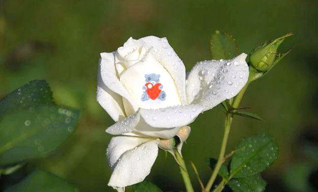 Квіти, что - нововведення в сучасній флорістіці!