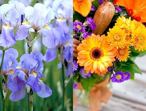 Які квіти дарують чоловікам