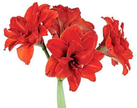 Які вибрати квіти для офісу?
