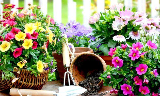 Кімнатні квіти, що мають бути в кожному домі