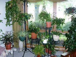 Кімнатні рослини в будинку