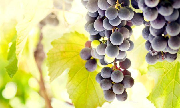 Компот з винограду: рецепти