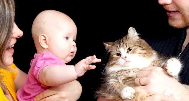 Кішка і новонароджена дитина в одному будинку