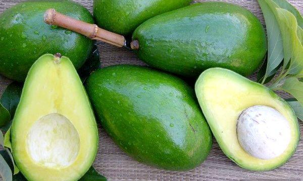 Масло авокадо: застосування в медицині і косметології