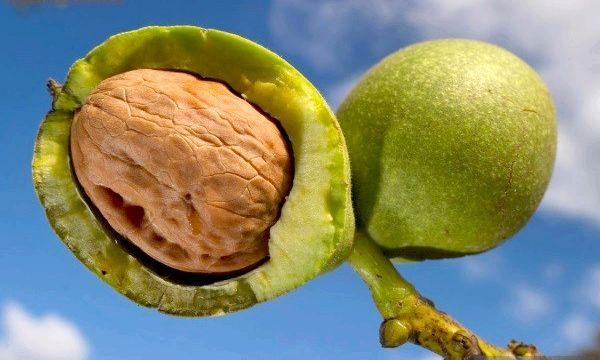 Настоянка волоського горіха: застосування і користь
