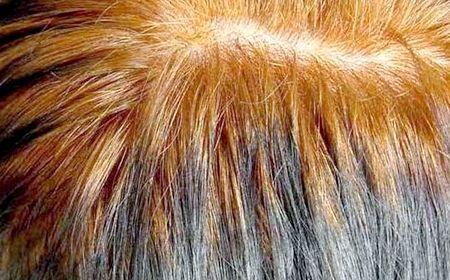 Фарбування волосся басмою