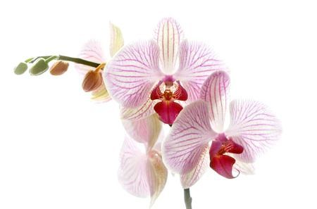 Орхідея: догляд та розмноження в домашніх умовах