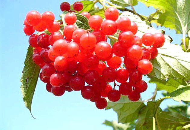 Осінні ягоди. Рецепти з осінніх ягід