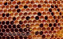 Перга бджолина