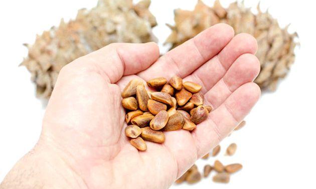 Корисні властивості кедрових горішків