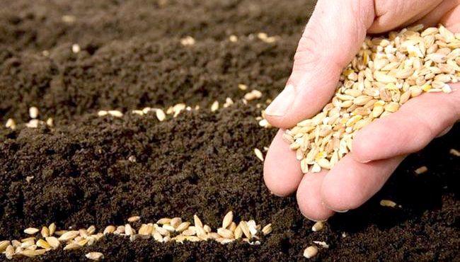 посів насіння