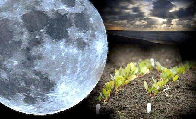 величезний місяць