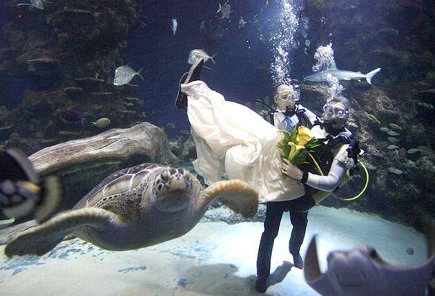 Весільна підводна одіссея