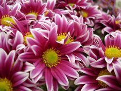 Вибираємо квіти за знаком зодіаку